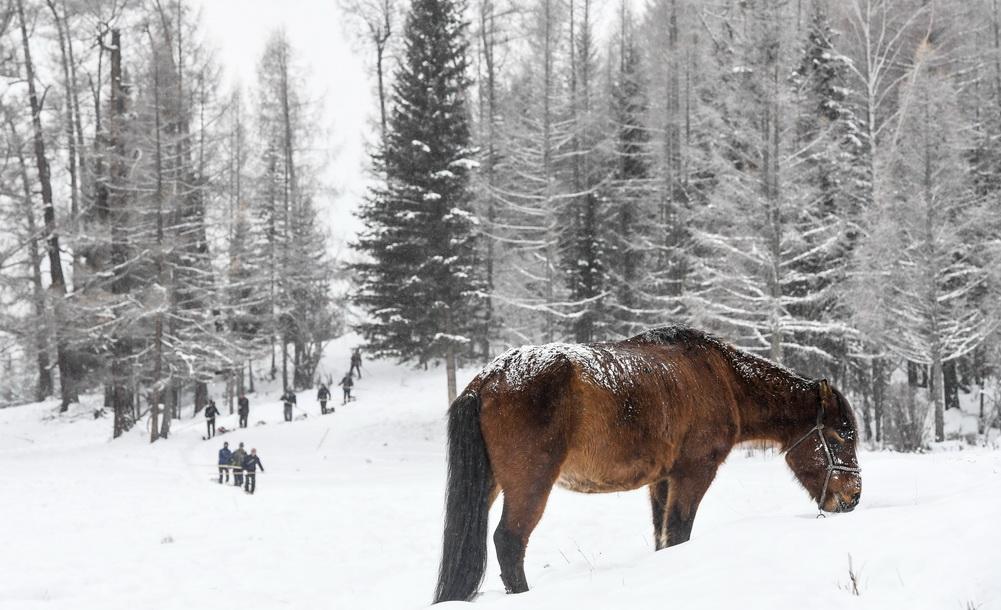新疆9位牧民開啟300公裏古老毛皮滑雪之旅