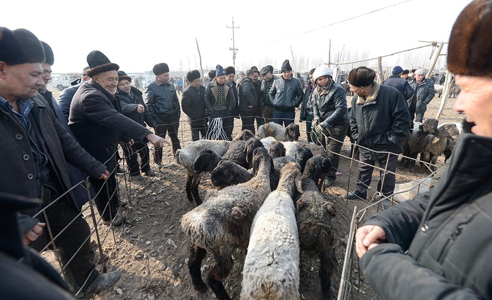 """新疆喀什:冬日火熱的""""牛羊巴扎"""""""