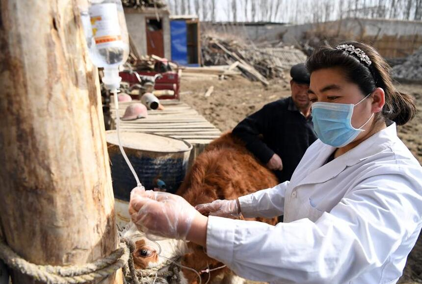 新疆高校服務鄉村助推脫貧攻堅