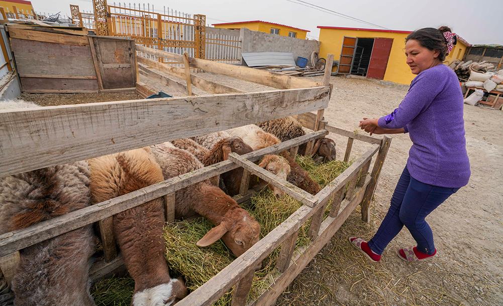新疆:凝心聚力 打好脫貧攻堅戰