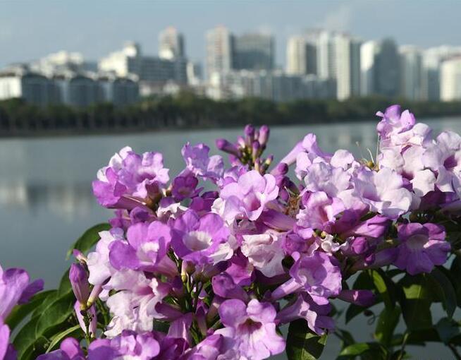 花開在冬季
