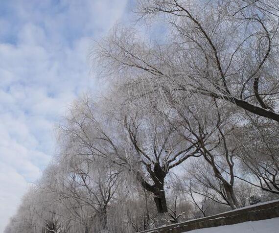 哈爾濱冬至霧凇美景
