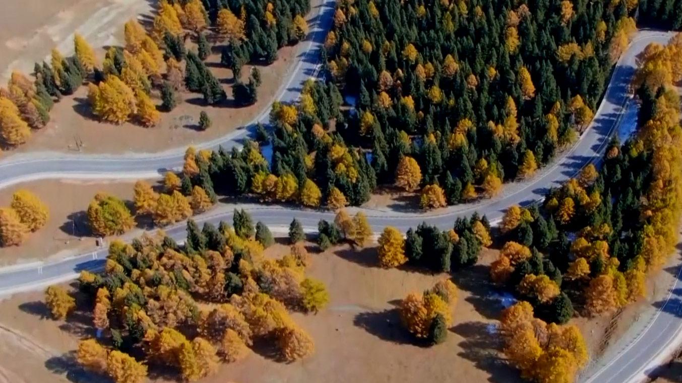 瞰中国当秋风渲染了松林